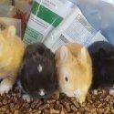 Продавам уникалени мини зайчета