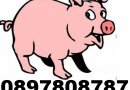 ЕКО СВИНЕФЕРМА ~ 0897 808 787 ~ гр. Монтана, продава ЦЕЛОГОДИШНО малки ПРАСЕНЦА и угоени ПРАСЕТА.