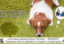 Премахване на петна и миризми от кучешка и котешка урина - София, Бургас