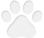 Балинезийска  котка