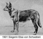 Елза фон Швабен