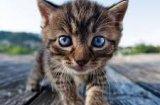 Какво да изберем: котка или котарак