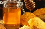 Може ли кучетата да ядат мед?