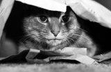 Как да се погрижим за стресирана котка