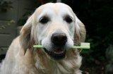 Да измием зъбите на кучето в няколко лесни стъпки