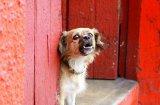 Как да научите кучето да спре да лае непрекъснато