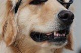 Любопитни факти за кучетата