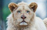Най-скъпо струващите домашни животни в света