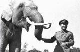 Животните, белязали световната наука, култура и история