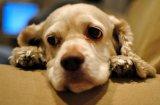 Алергии при кучетата