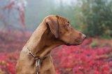 Грижи за кучето през есента