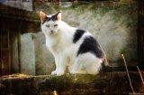 Насоки и препоръки при осиновяване на улична котка