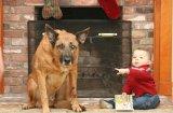 Отстраняване на петна и миризма от кучешка урина