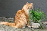 Храни, които са вредни за котките