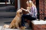 5 много опасни храни за кучета