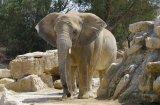 Забавни клипове с животни, които могат да говорят