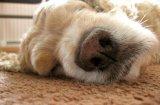 Най-честите здравословни проблеми при възрастните кучета