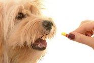 Вътрешно обезпаразитяване на куче