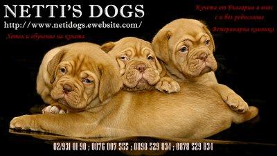 NETTISDOGS - Кучета от България и внос с и без родословие