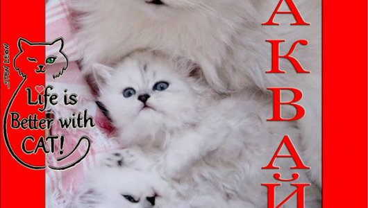 Очакваме малки сладки котенца! Запазете си коте сега! Безплатно!