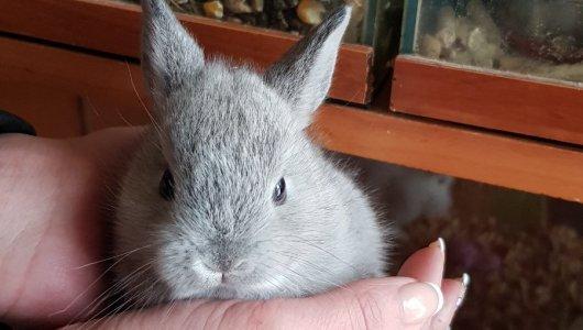 Мими зайчета
